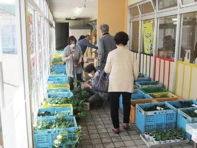 野菜苗販売